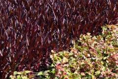 Sumpfpflanzen im Beet