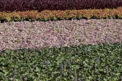 Freifläche mit Teichpflanzen