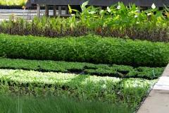 Teichpflanzen im Gewächshaus
